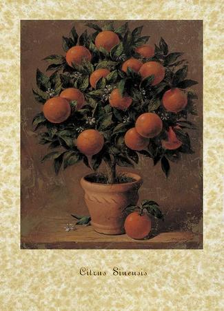 https://imgc.artprintimages.com/img/print/orange-tree_u-l-f7tune0.jpg?p=0