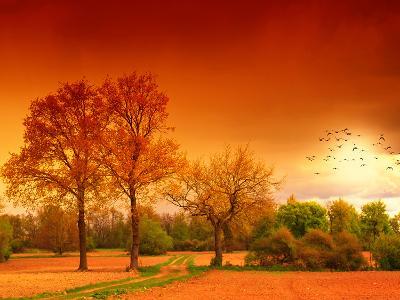 Orange World-Philippe Sainte-Laudy-Photographic Print