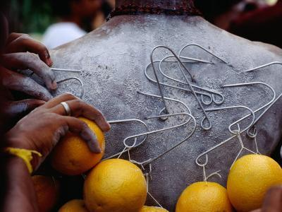 Oranges Hanging from Piercings on a Devotee's Back, Thaipusam Festival, Singapore, Singapore-Michael Coyne-Photographic Print