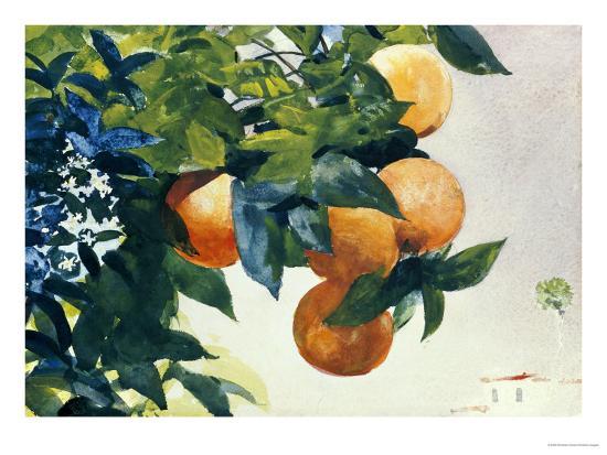 Oranges on a Branch, 1885-Winslow Homer-Premium Giclee Print