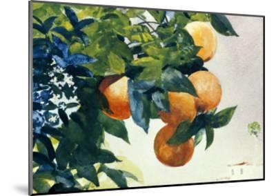 Oranges on a Branch, 1885-Winslow Homer-Mounted Giclee Print