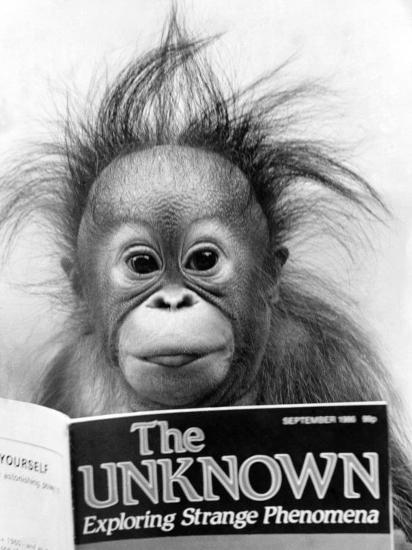 Orangutang, October 1986--Photographic Print
