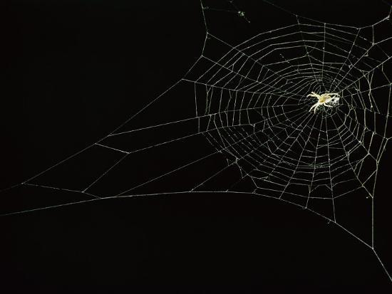 Orb Weaver Spider on its Web-Victor R^ Boswell, Jr-Photographic Print
