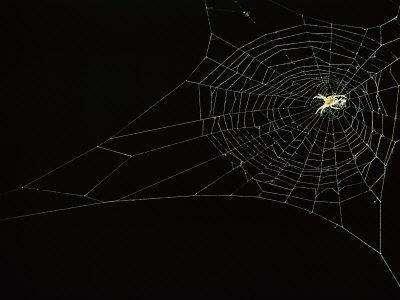 https://imgc.artprintimages.com/img/print/orb-weaver-spider-on-its-web_u-l-p3jjxk0.jpg?p=0