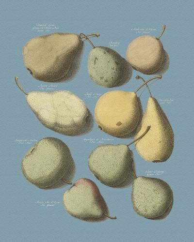Orchard Fruits II-A^ Poiteau-Giclee Print