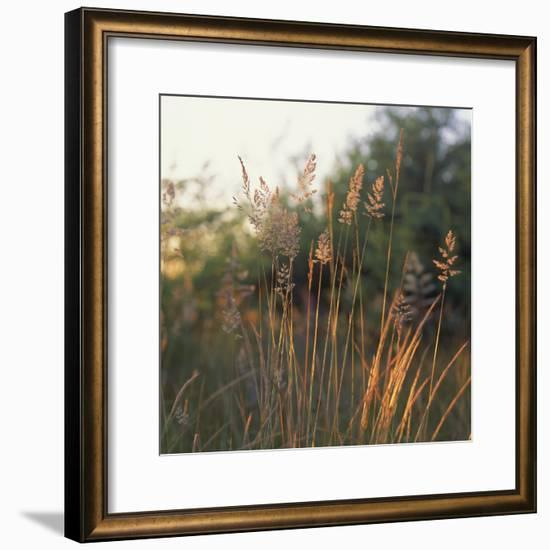 Orchard Grass, Washington-Reynolds Trish-Framed Photographic Print