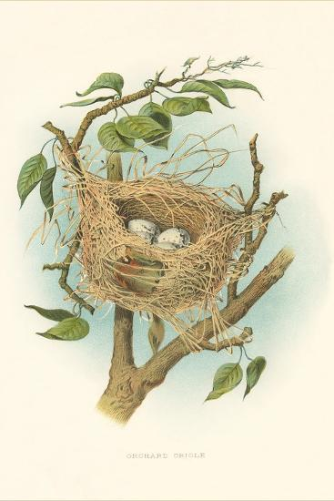 Orchard Oriole Nest and Eggs--Art Print