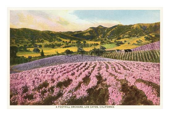 Orchards, Los Gatos, California--Art Print