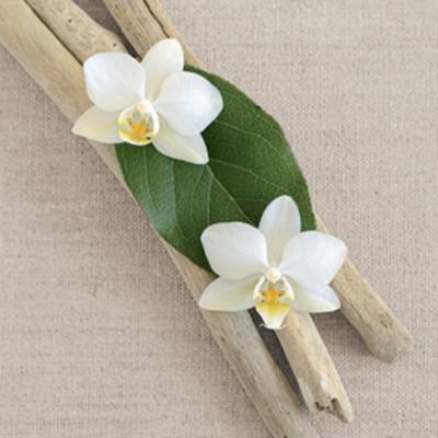 Orchid and Wood-Chatelain-Art Print