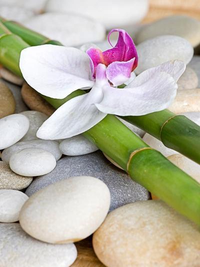 Orchid Bamboo-Lebens Art-Art Print