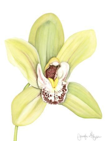 https://imgc.artprintimages.com/img/print/orchid-beauty-ii_u-l-p8kxfx0.jpg?p=0