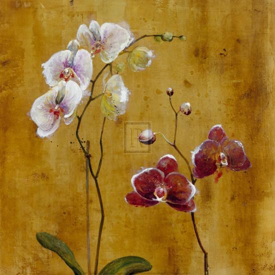 Orchid Bloom II-Georgie-Art Print