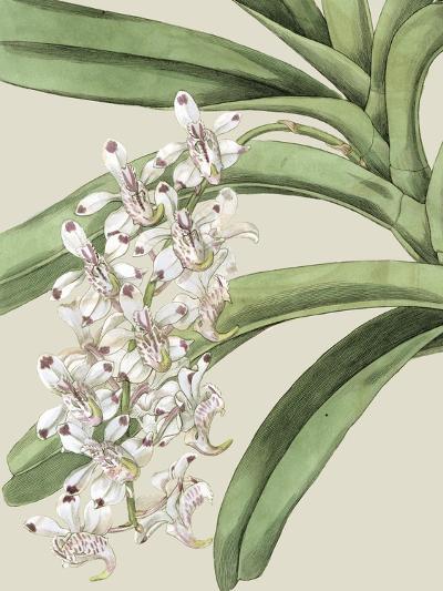Orchid Blooms I-Vision Studio-Art Print