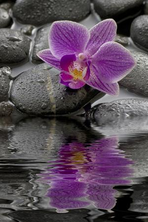 https://imgc.artprintimages.com/img/print/orchid-blossom-on-black-stones-water-reflection_u-l-q11w06g0.jpg?p=0
