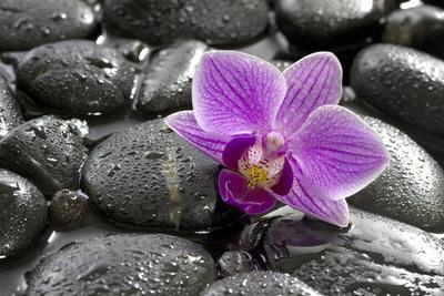 https://imgc.artprintimages.com/img/print/orchid-blossom-on-black-stones_u-l-q11vs0b0.jpg?p=0