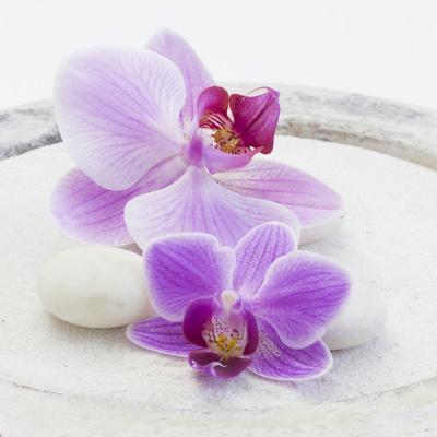 https://imgc.artprintimages.com/img/print/orchid-blossoms-on-white-sand_u-l-q11zci00.jpg?p=0