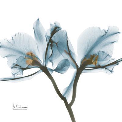 https://imgc.artprintimages.com/img/print/orchid-blue_u-l-pyjq860.jpg?p=0