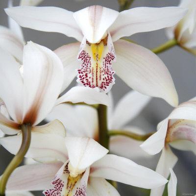 https://imgc.artprintimages.com/img/print/orchid-closeup-i_u-l-p23fd50.jpg?p=0