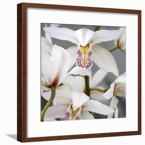Orchid Closeup I-Nicole Katano-Framed Photo