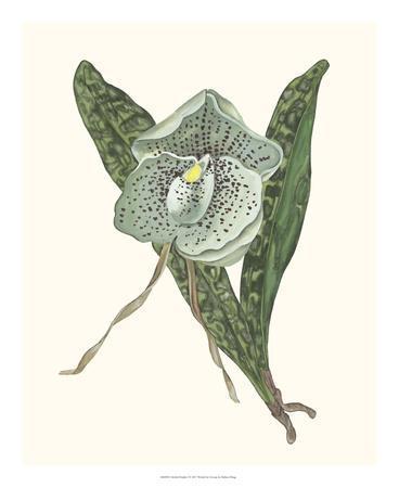 https://imgc.artprintimages.com/img/print/orchid-display-i_u-l-f97on70.jpg?p=0
