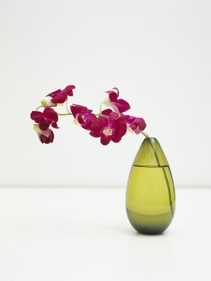 Orchid Flower in a Vase-Estelle Klawitter-Photographic Print