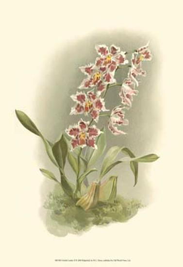 Orchid Garden II-H^g^ Moon-Art Print