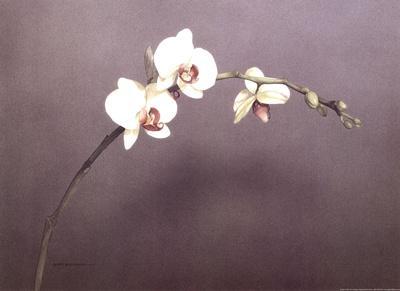 https://imgc.artprintimages.com/img/print/orchid-i_u-l-f8usko0.jpg?p=0