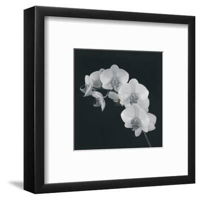 Orchid Illusion II-Katja Marzahn-Framed Art Print