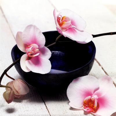 Orchid in a Bowl-Stephane De Bourgies-Art Print