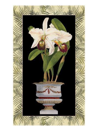 Orchid in Urn I-Deborah Bookman-Art Print