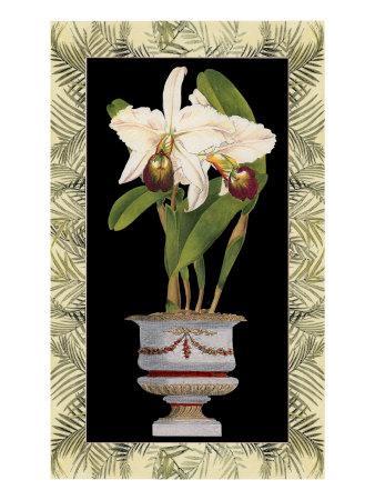 https://imgc.artprintimages.com/img/print/orchid-in-urn-i_u-l-q11adkk0.jpg?p=0
