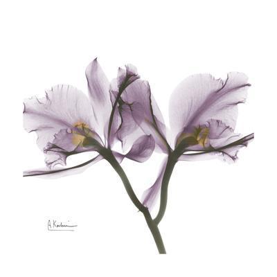 https://imgc.artprintimages.com/img/print/orchid-lavender_u-l-pyk08s0.jpg?p=0