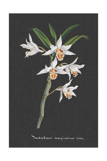 Orchid on Slate IV-Vision Studio-Art Print