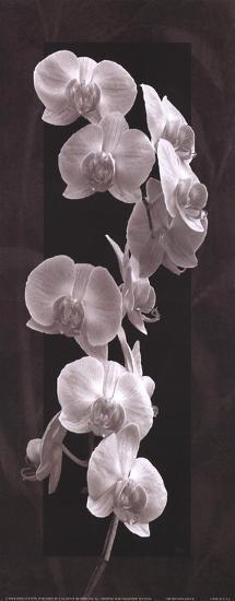 Orchid Opulence I-Katrina Craven-Art Print