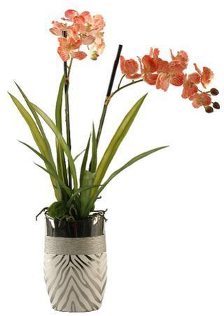 Orchid Safari - Blush