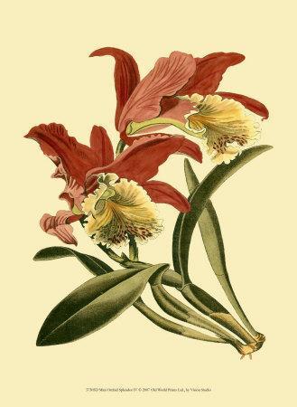 https://imgc.artprintimages.com/img/print/orchid-splendor-iv_u-l-f1pojs0.jpg?p=0