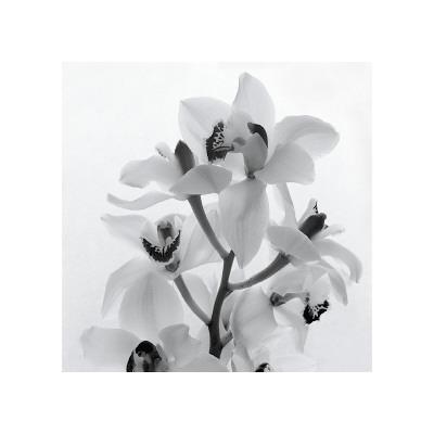 https://imgc.artprintimages.com/img/print/orchid-spray-i_u-l-f4ds960.jpg?p=0