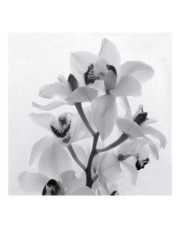 https://imgc.artprintimages.com/img/print/orchid-spray-i_u-l-f8d1bn0.jpg?artPerspective=n