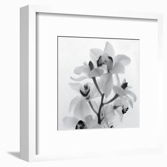 Orchid Spray I-Tom Artin-Framed Art Print
