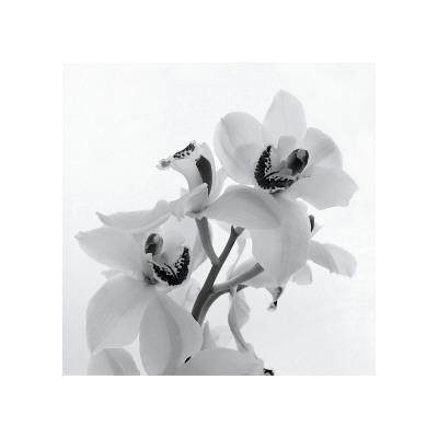 https://imgc.artprintimages.com/img/print/orchid-spray-ii_u-l-f4ds9c0.jpg?p=0