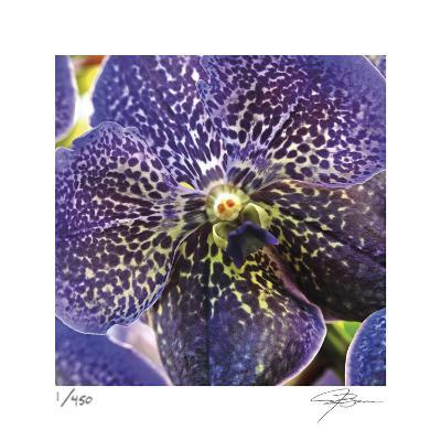 Orchid Square-Ken Bremer-Limited Edition