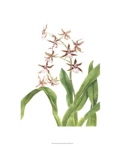 Orchid Study III-Pamela Shirley-Limited Edition