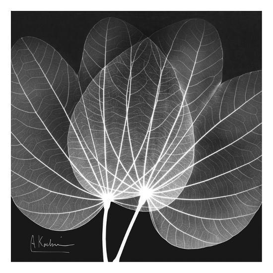 Orchid Tree Black and White-Albert Koetsier-Art Print