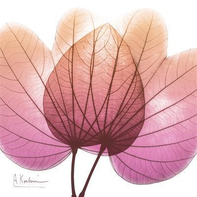https://imgc.artprintimages.com/img/print/orchid-tree-pink_u-l-pyjpcc0.jpg?p=0