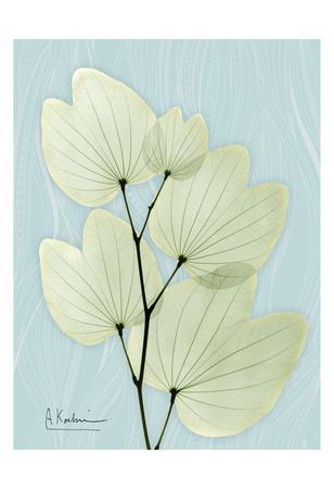 https://imgc.artprintimages.com/img/print/orchid-tree_u-l-f69ffn0.jpg?p=0