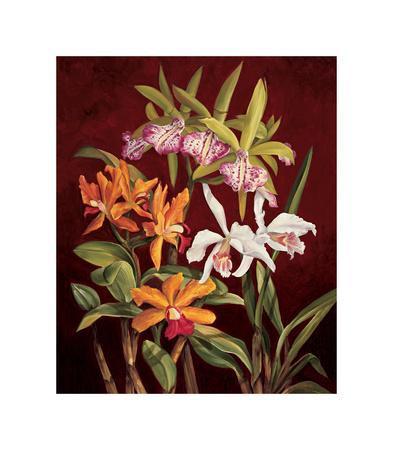 https://imgc.artprintimages.com/img/print/orchid-trio-ii_u-l-f7m48v0.jpg?p=0