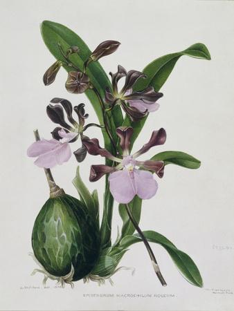 https://imgc.artprintimages.com/img/print/orchid_u-l-p392mq0.jpg?p=0