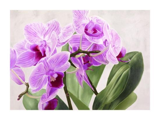 Orchidee selvagge-Sergio Jannace-Art Print