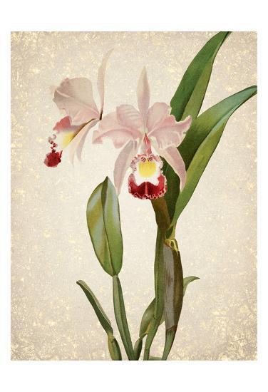 Orchids 2-Kimberly Allen-Art Print