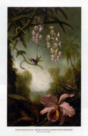 Orchids and Spray Orchids with Hummingbirds-Martin Johnson Heade-Art Print